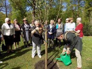 Birutė Butkevičienė puošia abelį tautine juosta