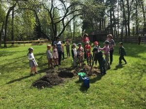 Panevėžio Gamtos mokyklos mokiniai sodina obelaitę